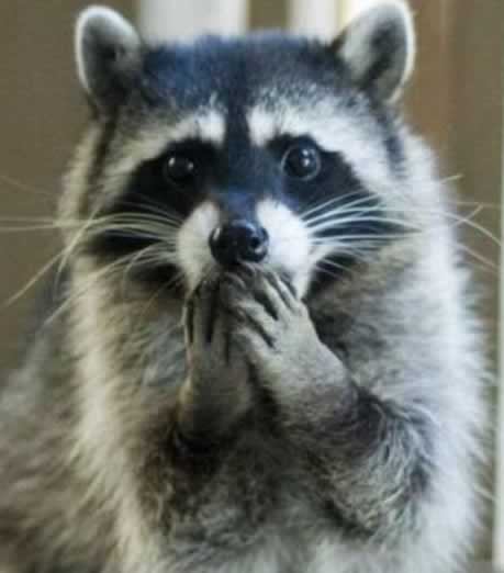 Raccoon Prevention Mr Raccoon Animal Removal